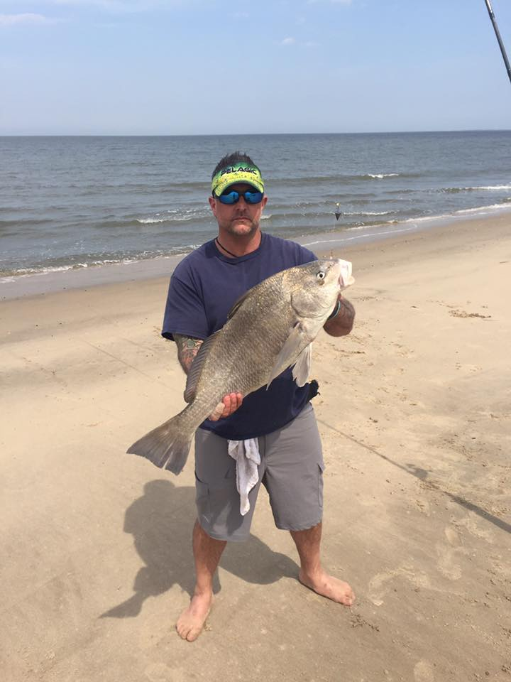 black drum, delaware, sussex county, beach plum island state park, delaware bay