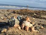 welk shells, the point, lighthouse, harbor of safe refuge, outer wall, beach combing, sea glass, cape henlopen state park