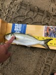 wots, war on the shore, fish measuring board