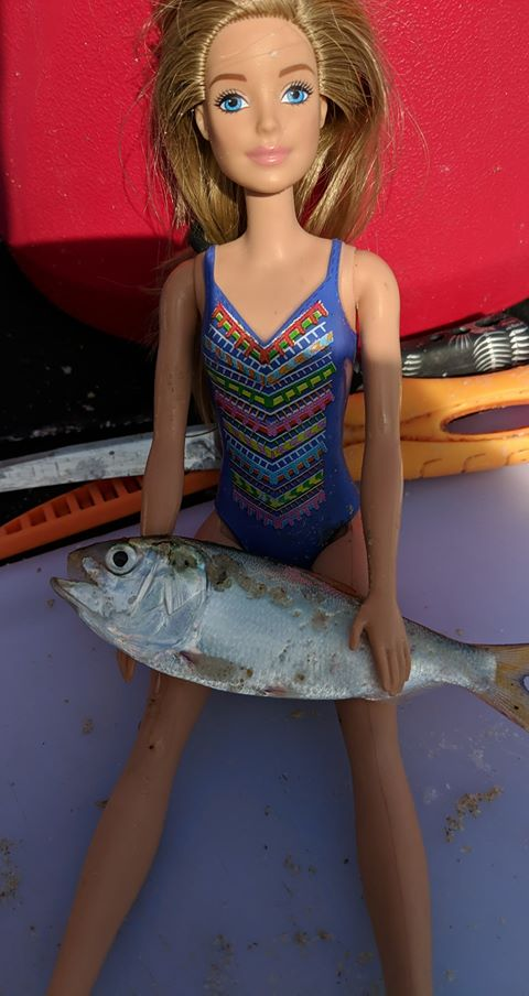 peanut bunker, menhaden, surf fishing, barbie doll holding fish, action figure holding fish, bait fish, omega, bunker, bunkah, striped bass candy, humpback whale food