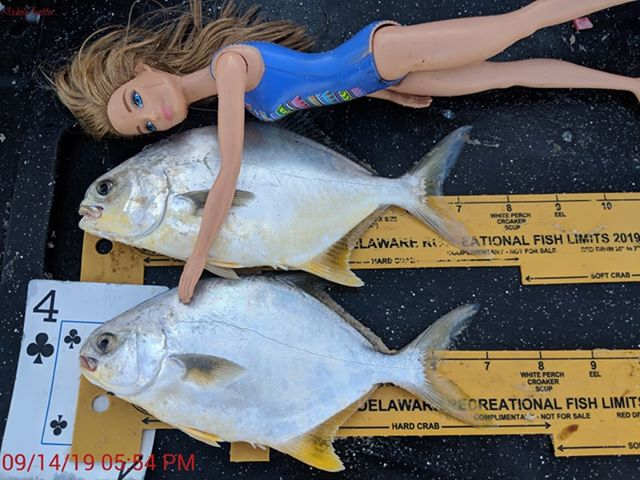 pompano, surf fishing, dealware, summer surf fishing series slam tournament, delaware, sussex county, faithful steward