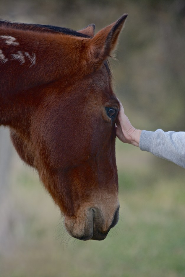 Just came by to say hello. One of several horses that welcomed a thoughtful touch. EE was ready to oblige.