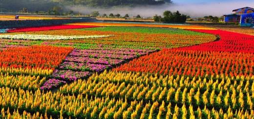 hualien-flower01