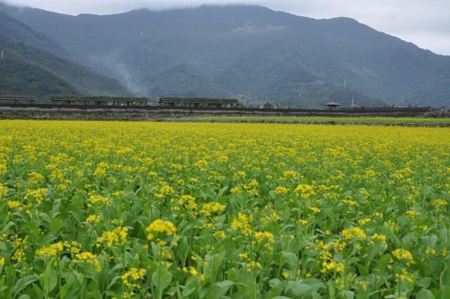 taitung-flower02