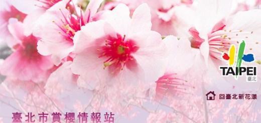 圖片來源:台北賞櫻微旅行