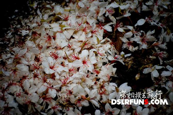 changhua_teng (8)