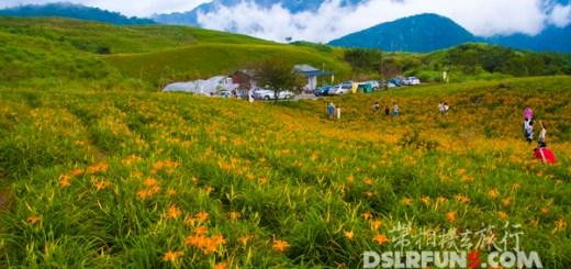 daylily (1)
