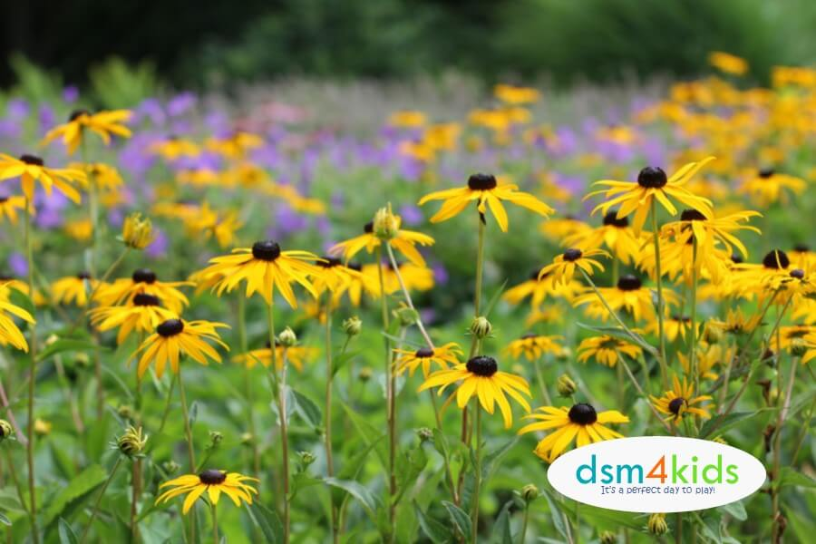 Go on a Wildflower Hunt with Your Kids in Central Iowa