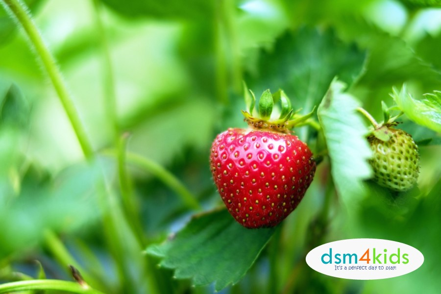 2018 Pick-Your-Own Berry Farms in Central Iowa