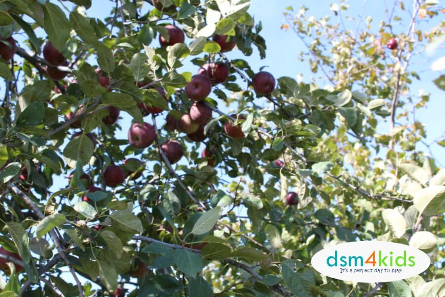 2018 11 Places To Go Apple Picking This Fall Near Des Moines