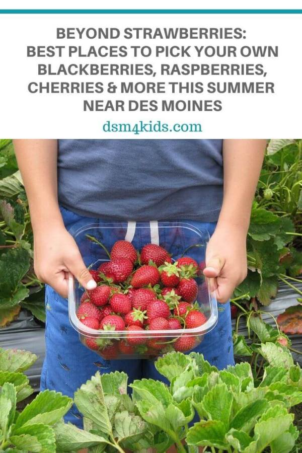 Beyond Strawberries: Best Places to Pick Your Own Blackberries, Raspberries, Cherries, and More this Summer near Des Moines – dsm4kids.com