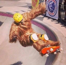 chewy-shreds