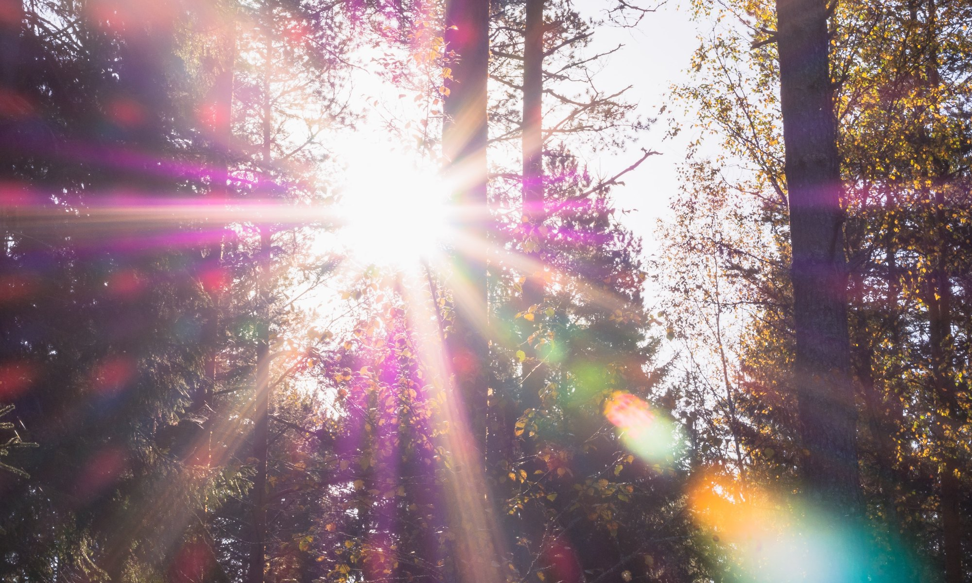 Forest with sunlight causing an addiction