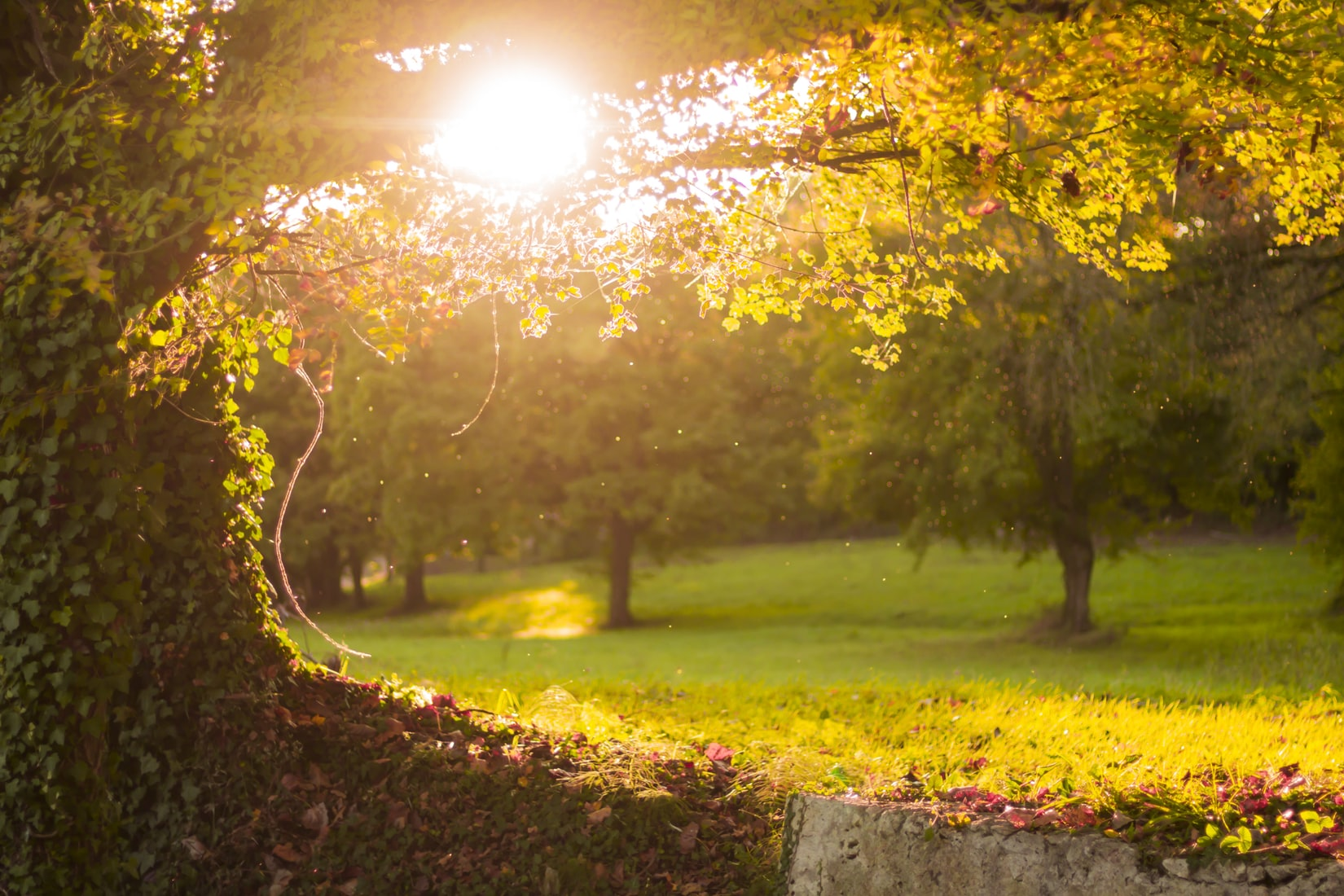 Green trees in park at golden hour