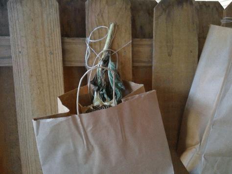 sunflower in bag