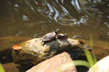 Patterns on Turtles' shells.