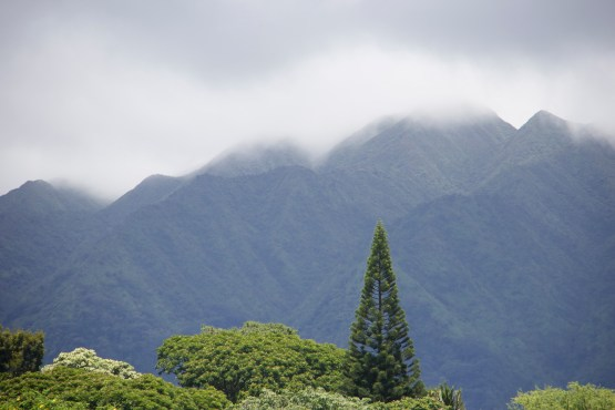 Manoa Valley view of the Ko'olaus