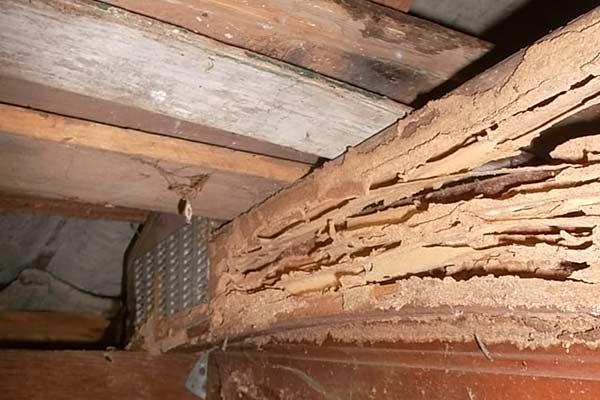 Termite Control Orange County What To Do About Termite