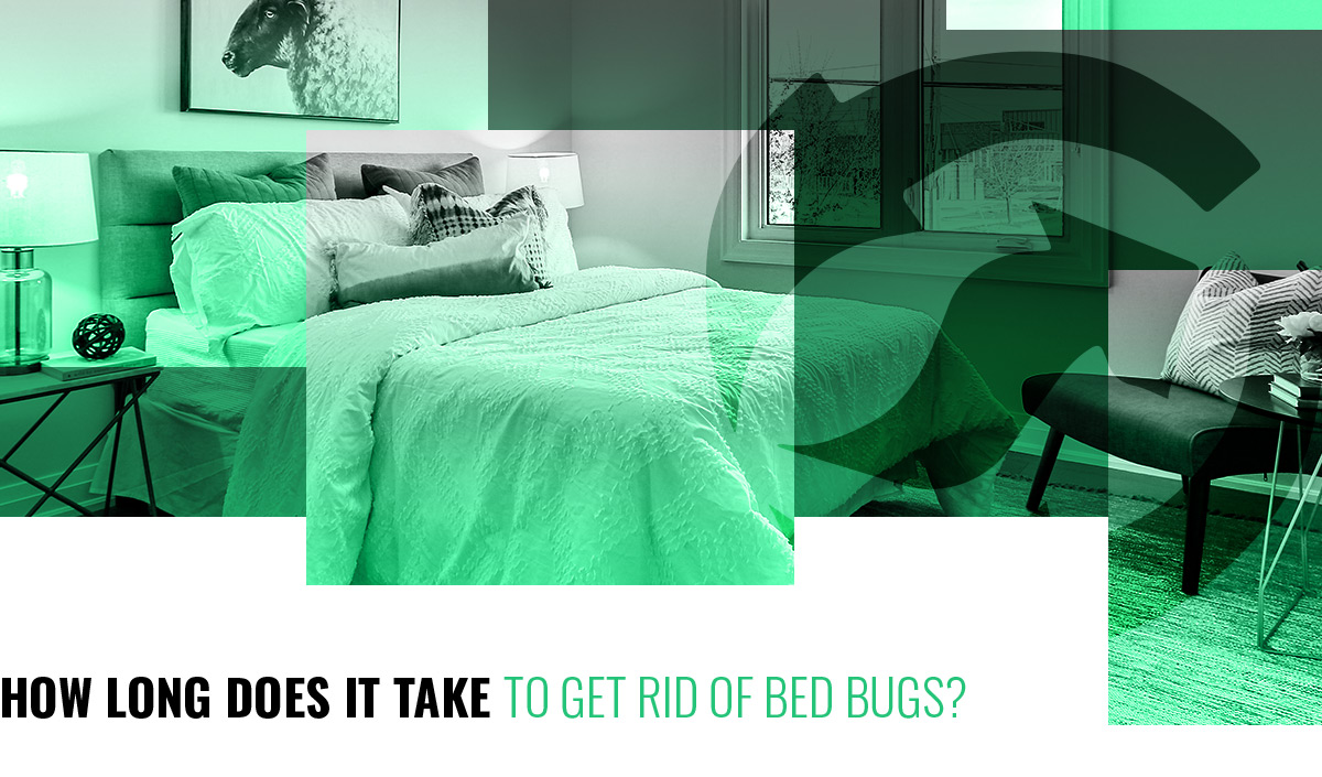 fastest way to get rid of bed bugs how