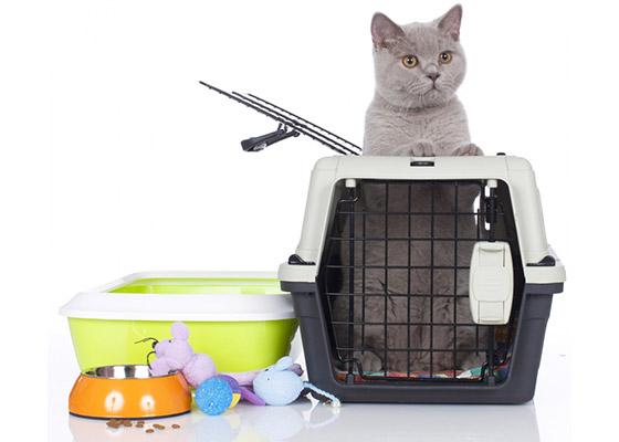 pet supplies outsource collars