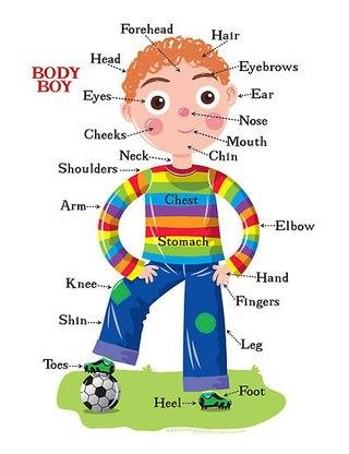 kroppen på engelsk