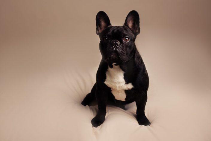 Newborn Photographer Glasgow - dog