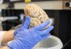 Forscher an der University of Washington haben erstmals erfolgreich Experimente zur Steuerung von Geräten durch bloße Gedankenimpulse durchgeführt.