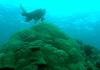 Erstmals haben Forscher vor der irakischen Küste ein Korallenriff entdeckt. Den vielfältigen Lebewesen scheint es gut zu gehen, berichten sie.