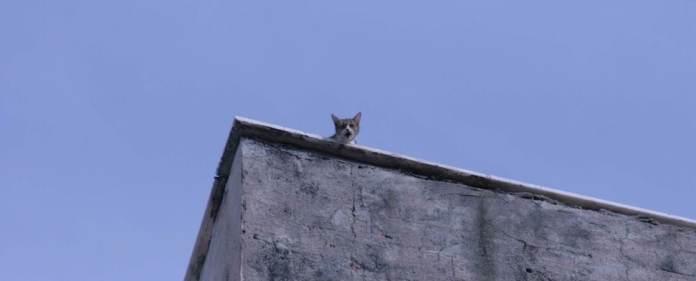 Der Aprilscherz ist in der Türkei eigentlich keine gefestigte Tradition, dennoch glaubten am gestrigen Dienstag nicht wenige an einen solchen, als Energieminister Yildiz eine Katze für die Stromausfälle am Wahlabend verantwortlich machte.