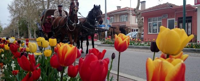 Tulpen in Istabul