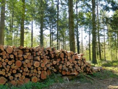Logs Cheriton Wood