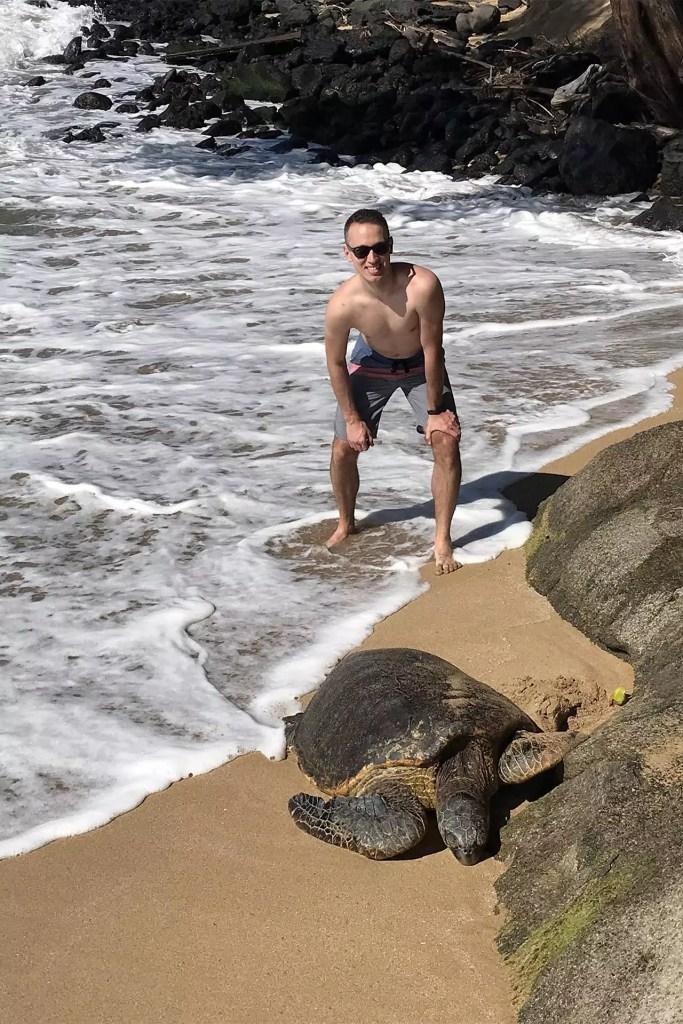 Sea Turle on Shore in Maui