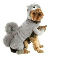 77% off dog Sweaters - Small squirrel dog costume from e ...
