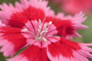 art floral 15