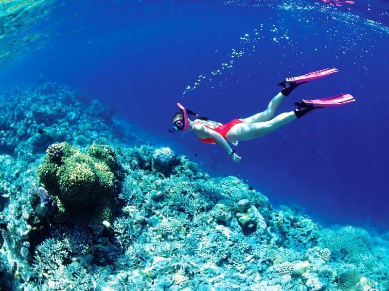 Lặn ngắm san hô trên đảo Hòn Mun Nha Trang