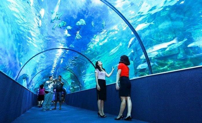 Có 1 đường hầm, bên trên là thủy cung cá biển rất đông du khách vào thăm