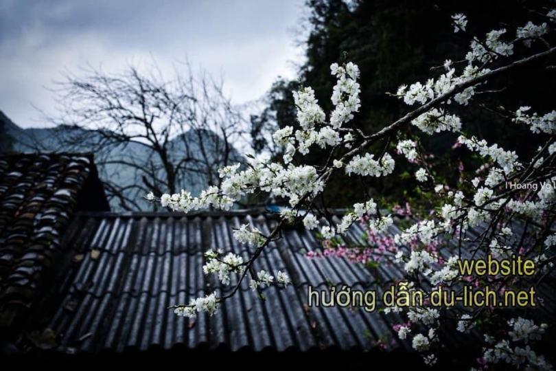 Chỉ ở Hà Giang mới có cảnh hoa đào đẹp thế này