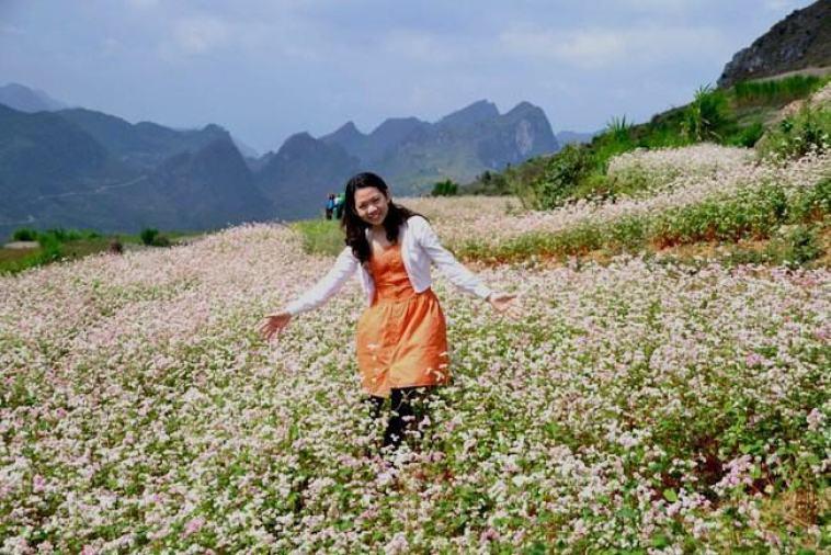 Hoa tam giác mạch ở xã Ma Lé và Lũng Cú