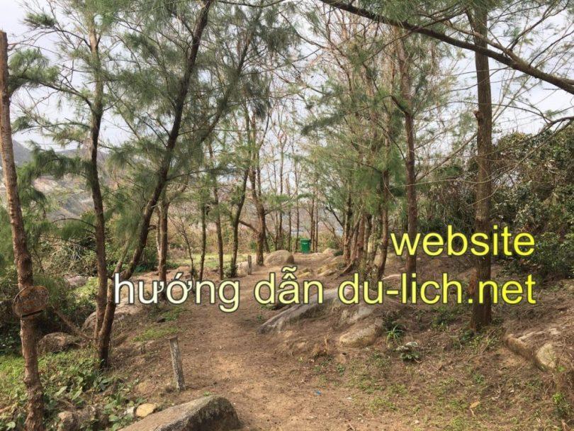 Trên đường leo lên Mũi Điện sẽ có khu rừng thông như thế này