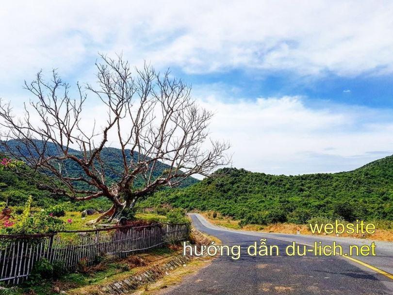 Hình ảnh Tuy Hòa Phú Yên Flycam: những con đường đẹp như mơ hiếm có trong đời bạn