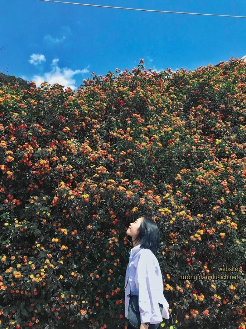 Một rừng hoa ven đường, đi giữa tuần bớt đông đúc