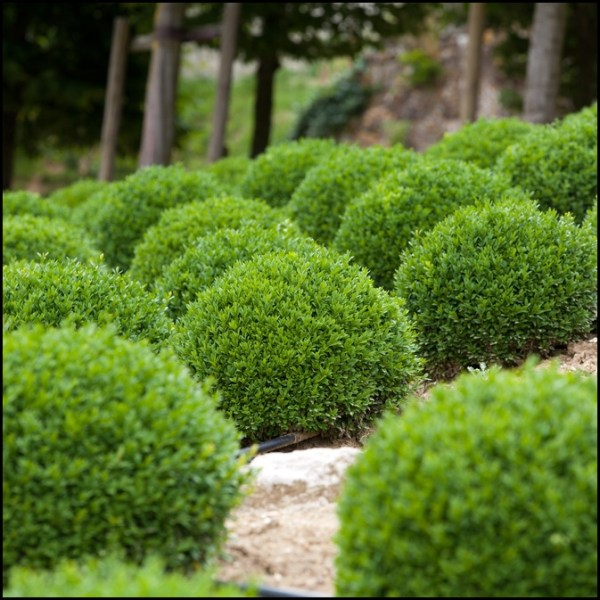 maintenance shrubs landscaping
