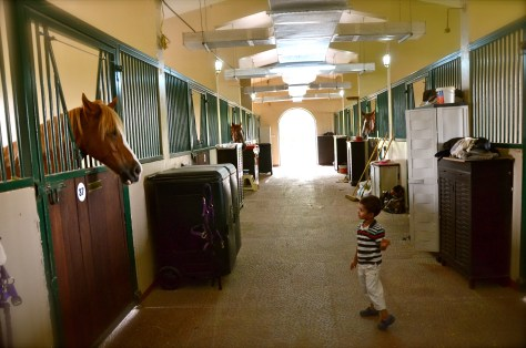 Horses in their stables