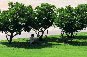 A man takes cover under the trees to hide from the sun in Satwa, Dubai. (Ahmad Ardity)