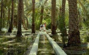 Az ősi öntözőrendszer Al Ainben, az oázisvárosban