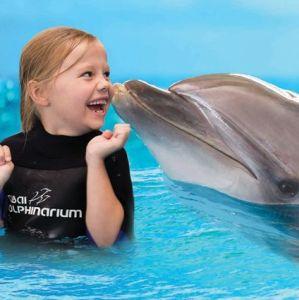 delfin úszás dubai gyerekkel