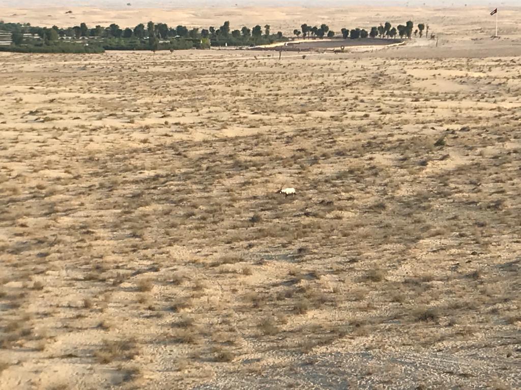 Arab gazella rezervátum mellett haladunk el
