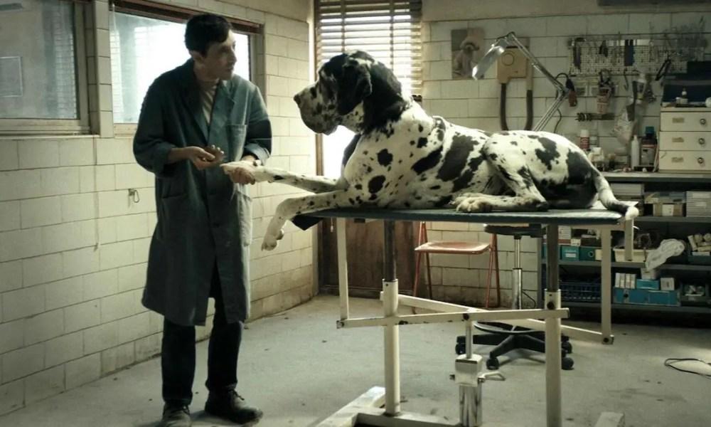 """Passione Cinema: """"Dogman"""" di Matteo Garrone"""