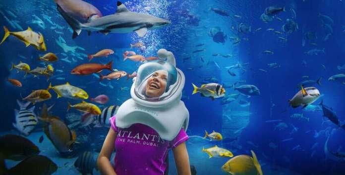 Shark Safari