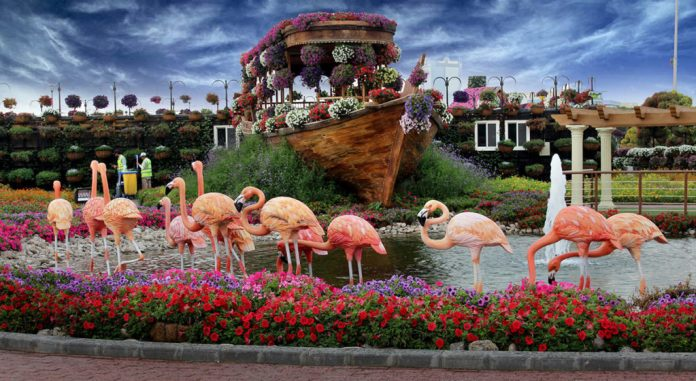 Dubai Miracle Garden - Dubai Pros and Cons